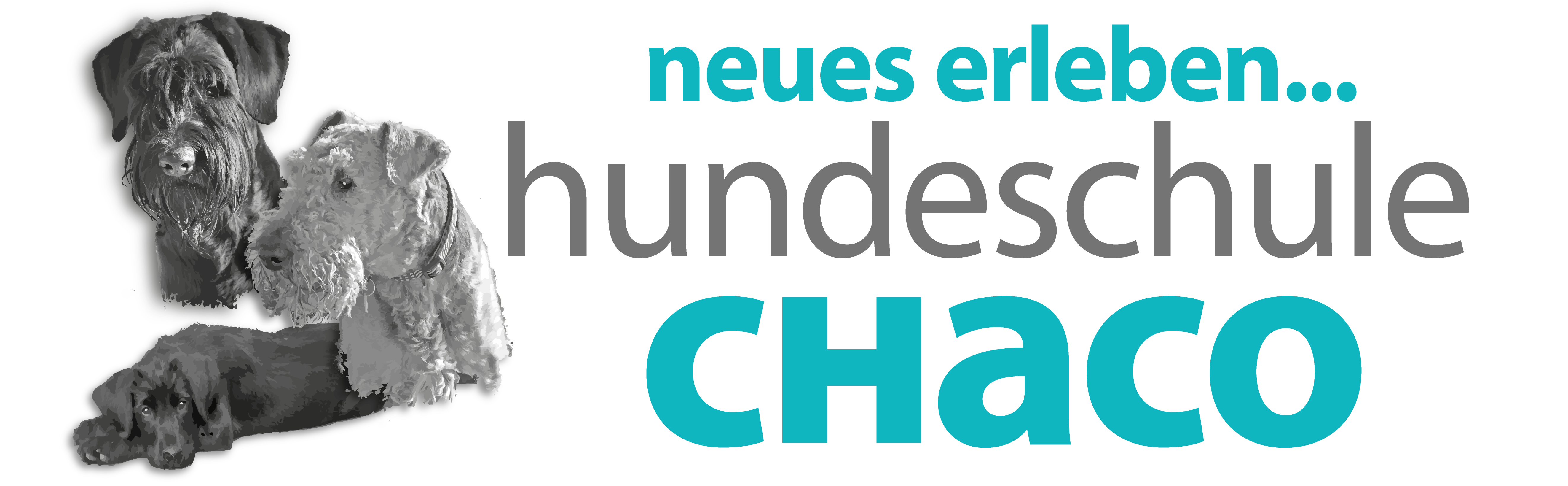 hundeschule-chaco.ch